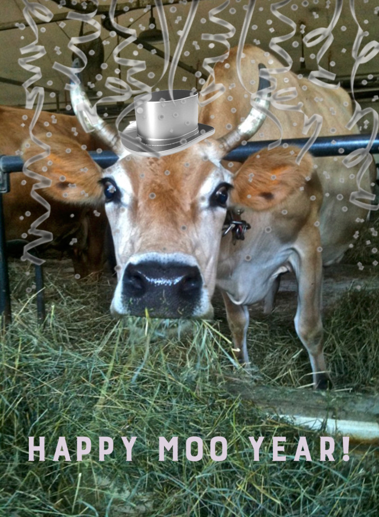 Happy-Moo-Year
