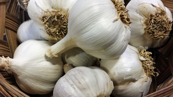 garlic-for-website