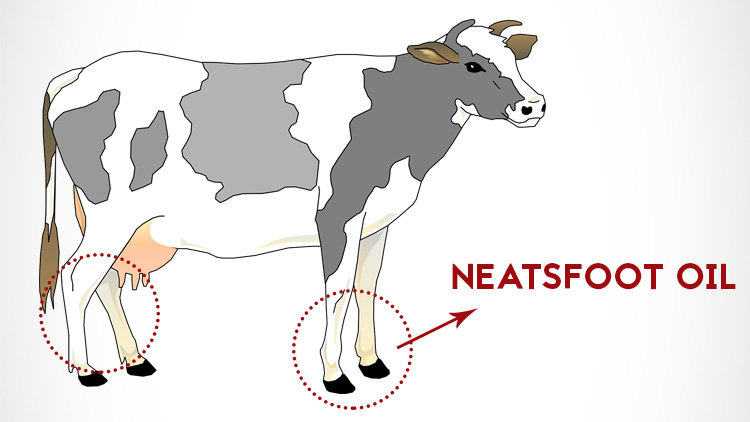 Neatsfoot oil comes from the shin and feet of cattle.