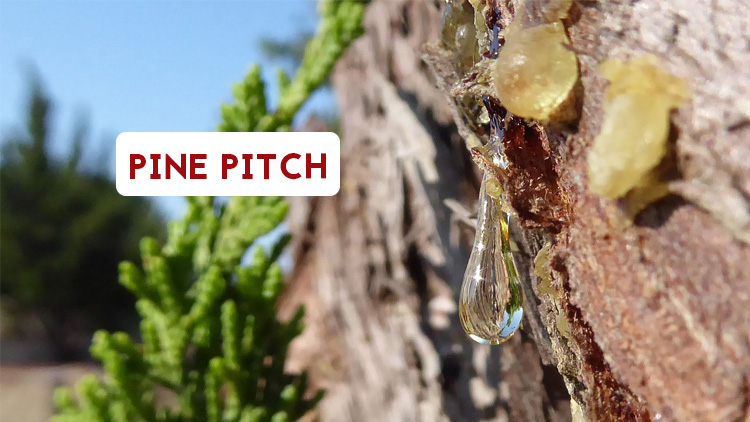Pine pitch is a natural leather waterproofer