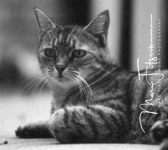 Cat-Malloween.jpg