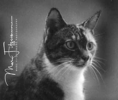 Cat-Whitney.jpg