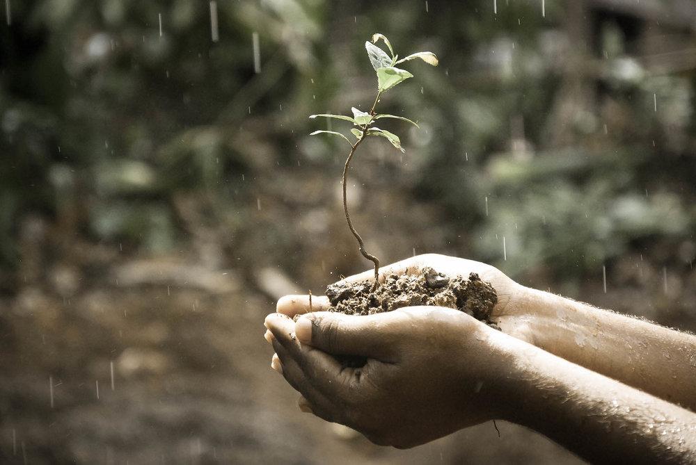 Saving a seedling.jpeg