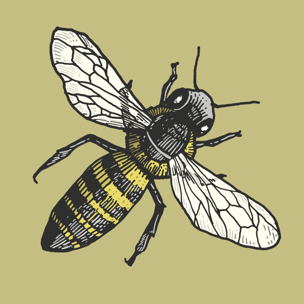 Bee 1.png