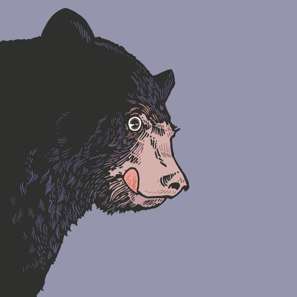Black Bear.png