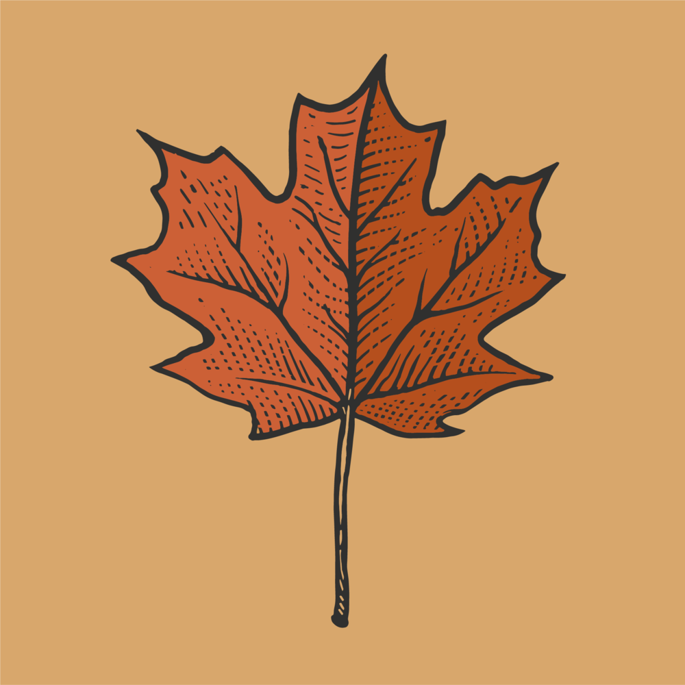 maple leaf 1.png