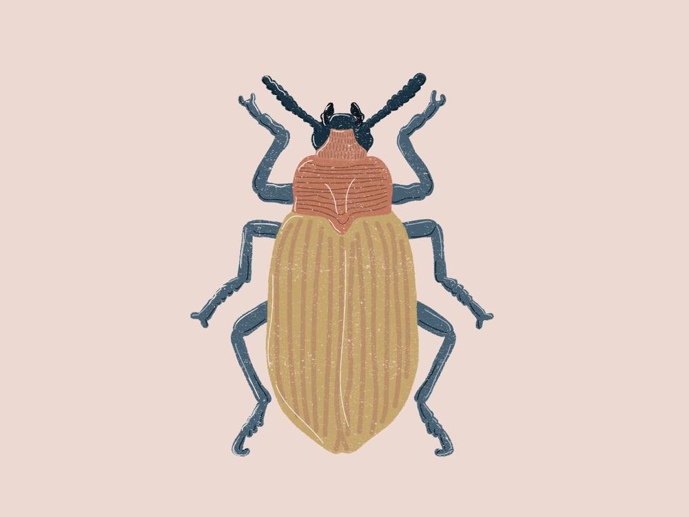 HeyBetsy_Beetle-02.png