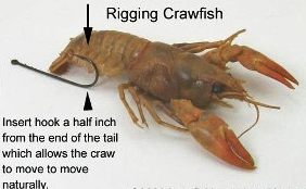 Kings River Crawdad