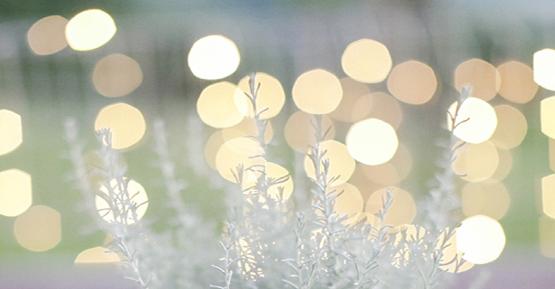 Lichterketten Hochzeiten