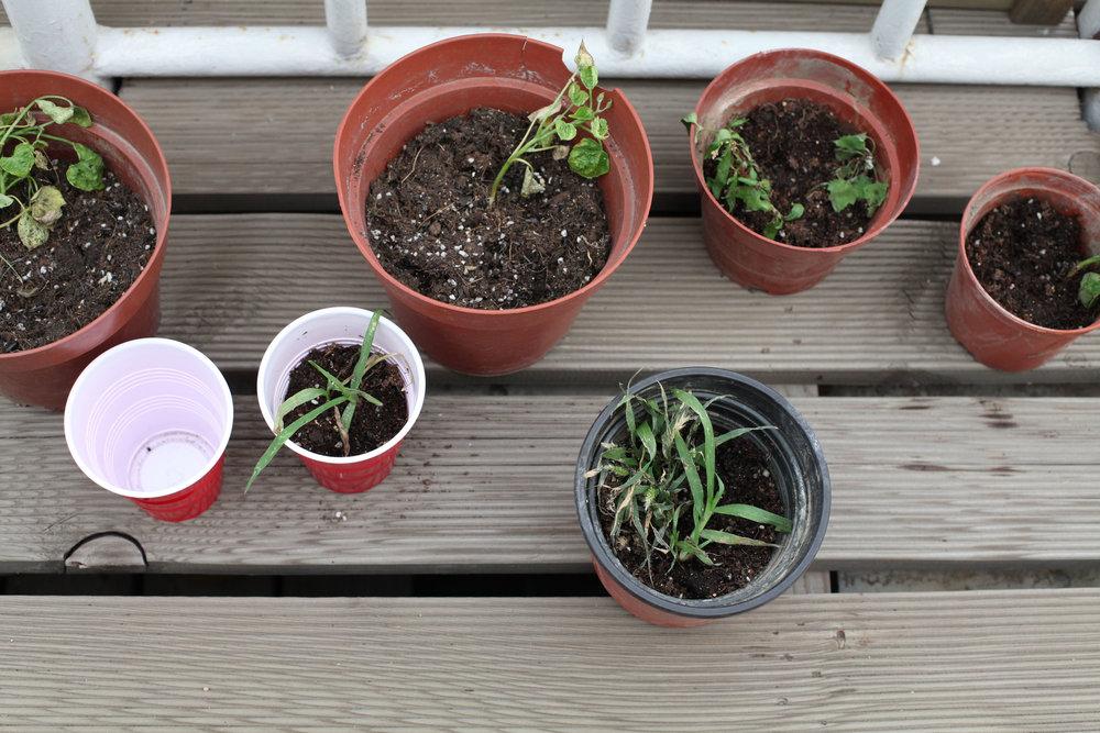Plants 08.jpg