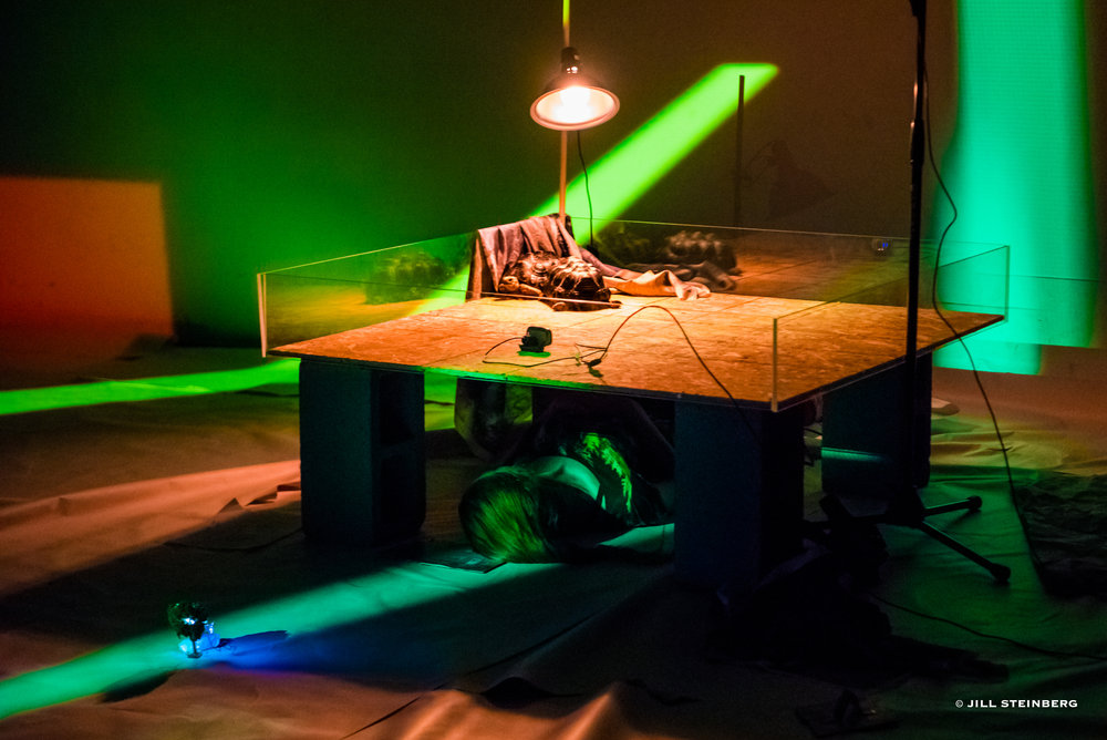 Photographs from June 2017 performance: tortoise-paced light projections, tortoise stage, paper floor, model tree
