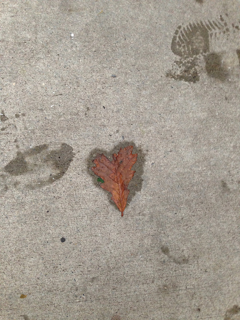 D.2014.10.Heart shaped leaf.2.JPG