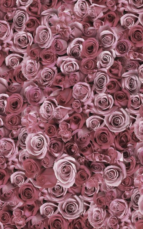dusty pink roses.jpg