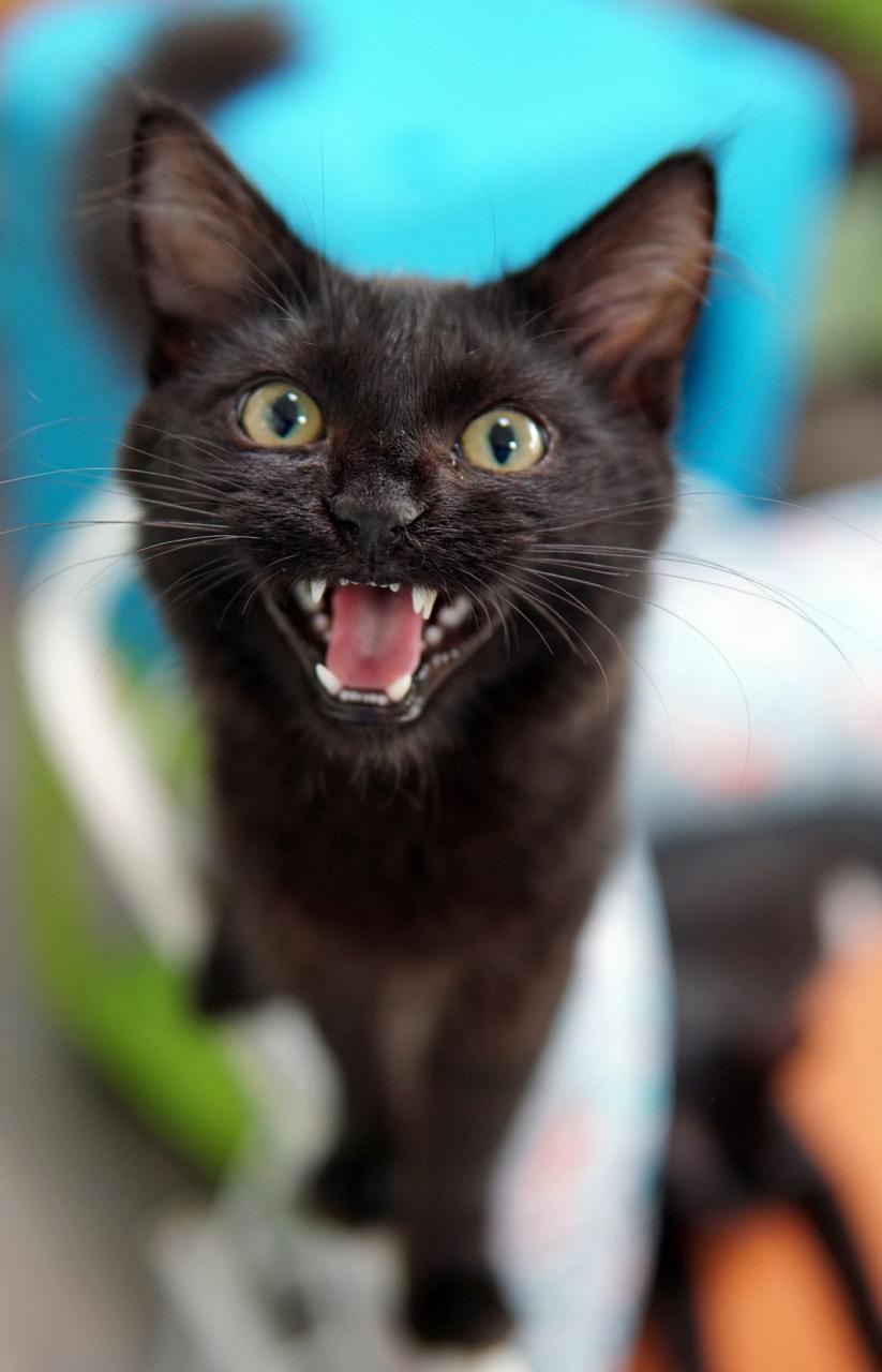Adoption-Center-Kitten2.jpg