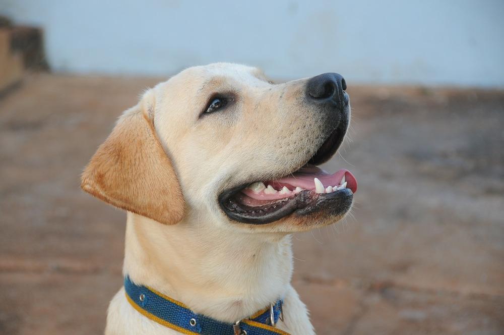 dog-434834_1280.jpg