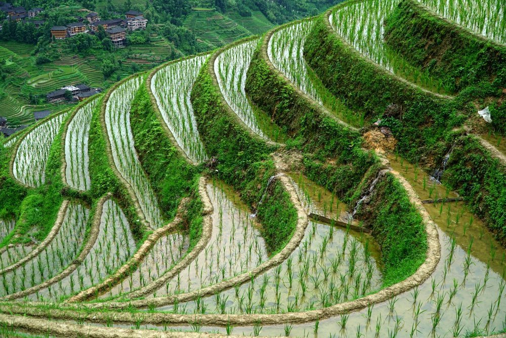 Man-made rice terraces create a seemingly natural pattern. Longsheng, China.