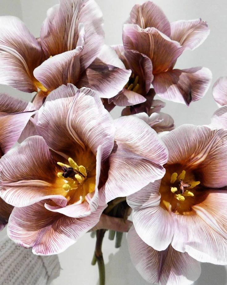Brownie Tulips