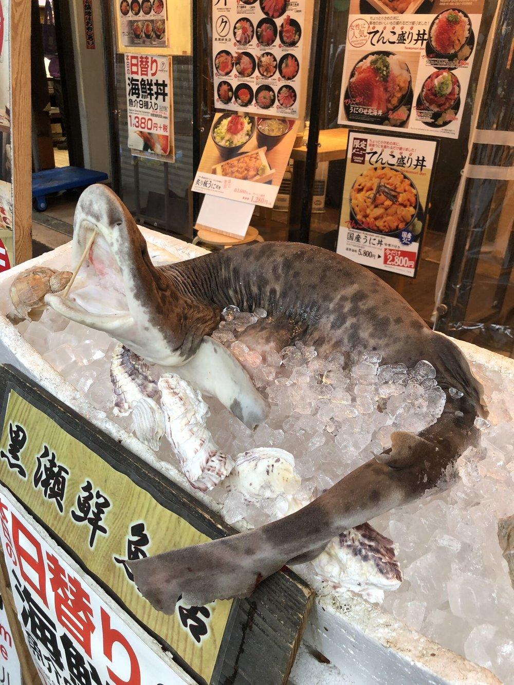 Fish markets_preview.jpeg