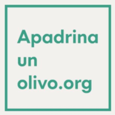 logo olivo.png