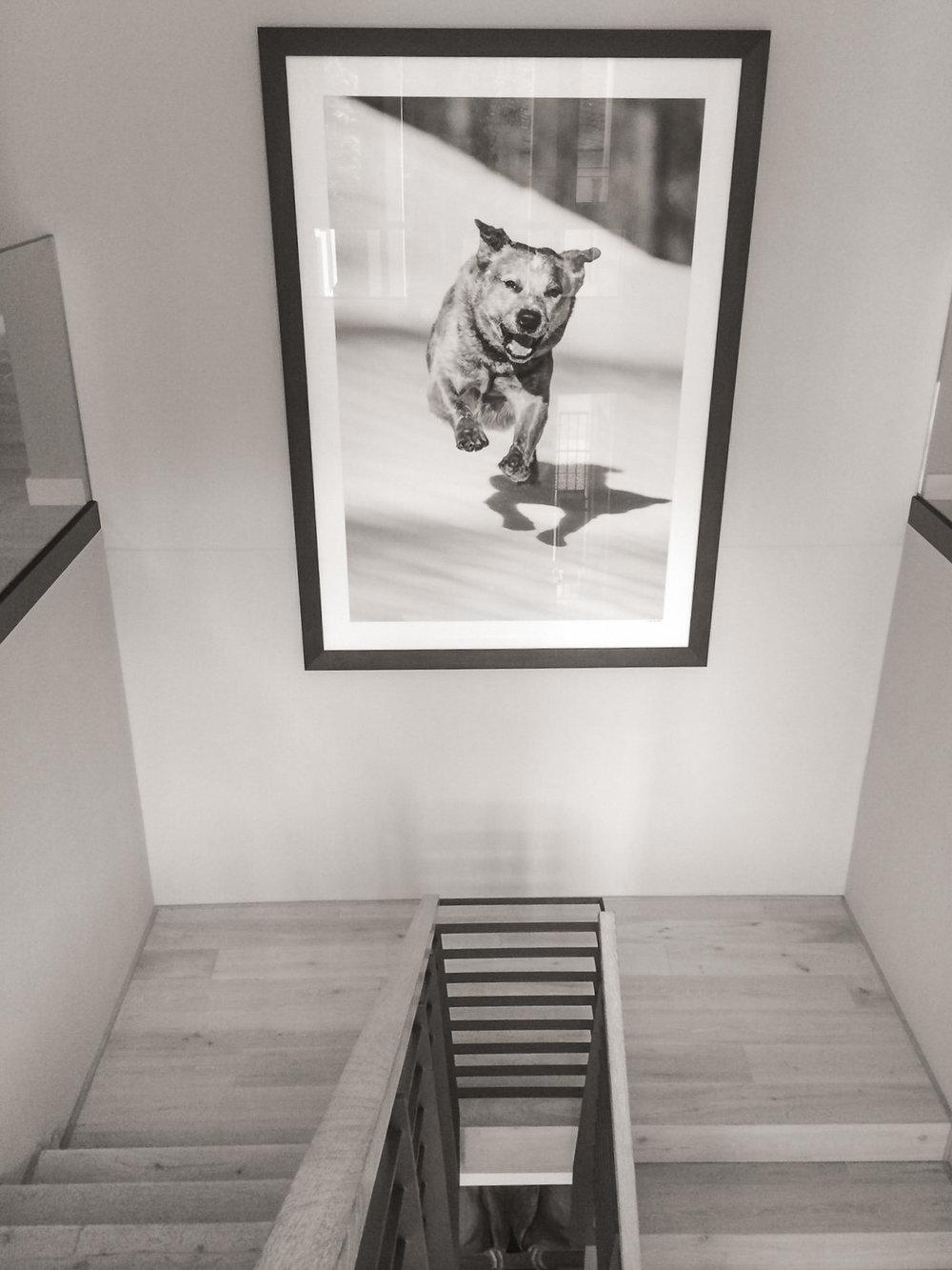 """Projekt """"Goliath fliegt"""" 1/1 fine art print Hahnemühle 120cm x180cm Rahmen 211cm x 148cm"""