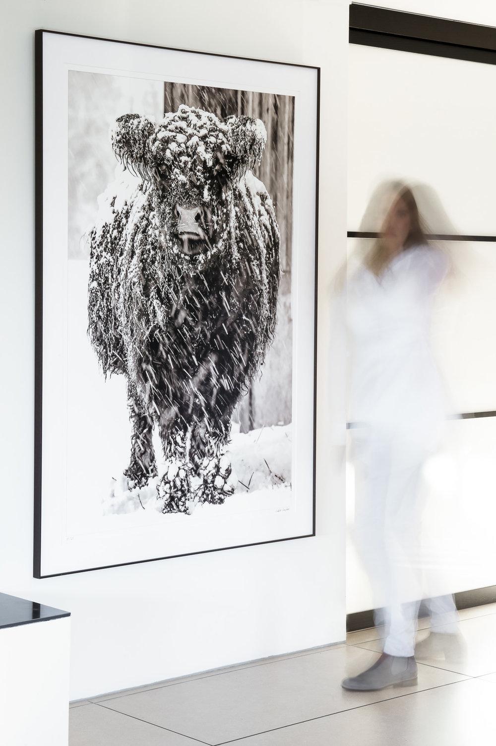 Carolina 1 17/25, fine art print 100cm x 150cm Rahmen Wenge 122cm x 174cm