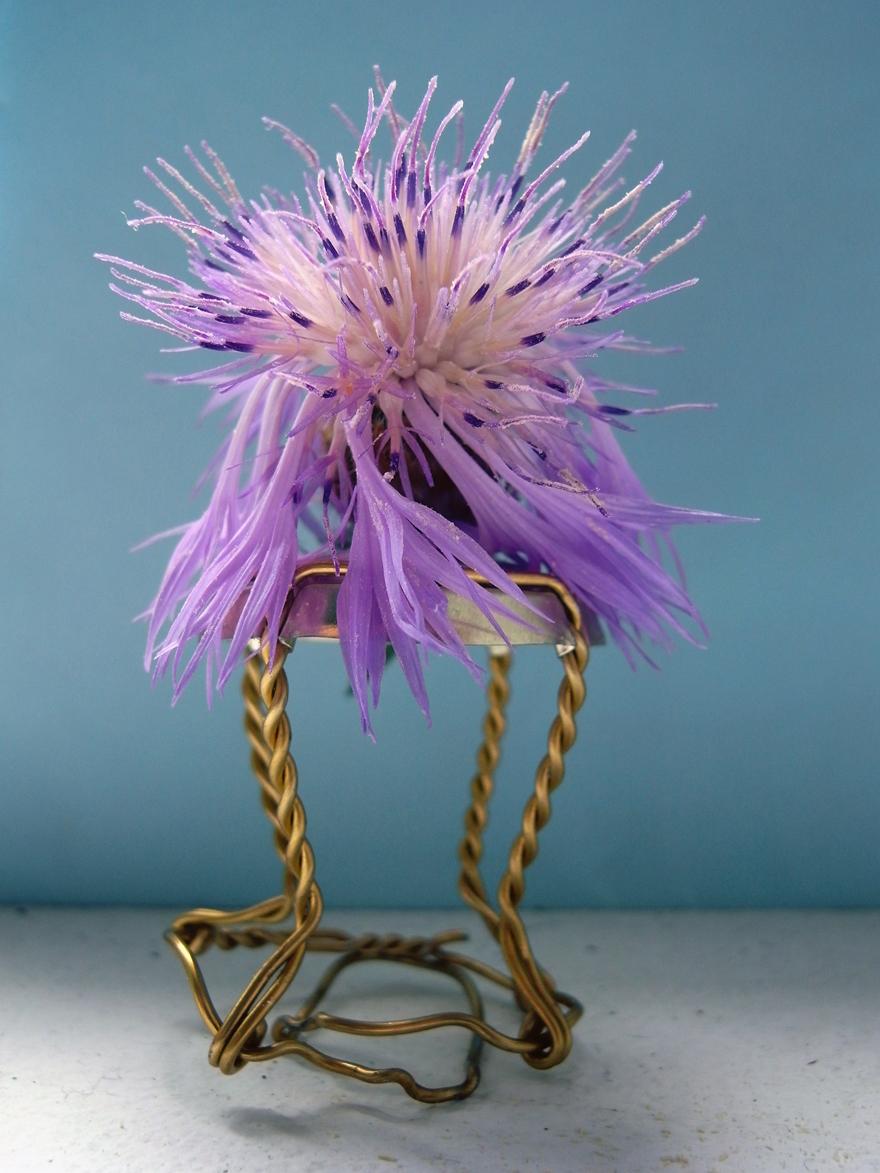 wispering thing  Miniskulptur, zweiteilig, Flockenblumenblüte und Champagnerkorkenhülse