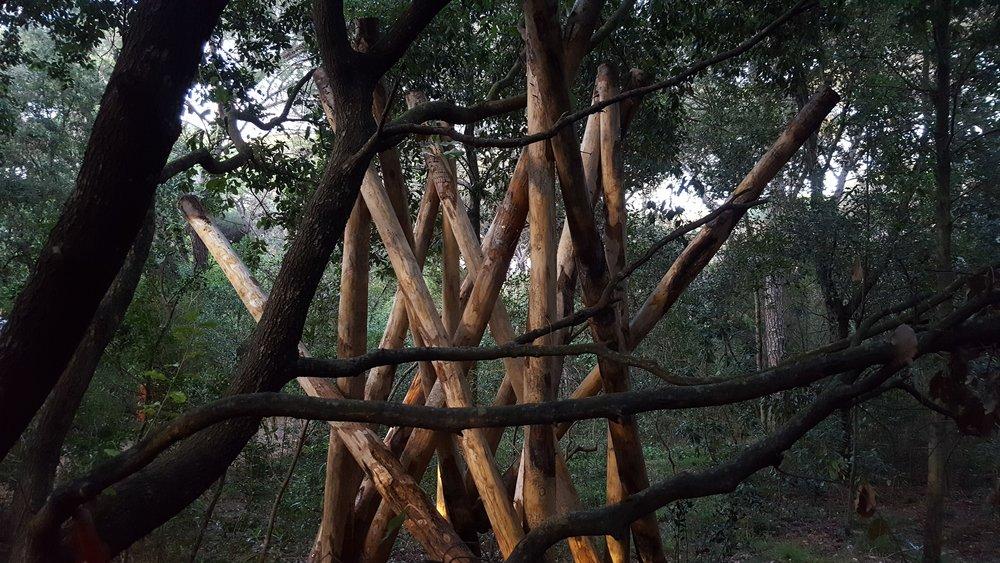 Luigi Greco Architetto - La Casa della Cicala - art in nature - Ambienta 2016 - Roccamare - Castiglione della Pescaia - arte naturale 6.jpg