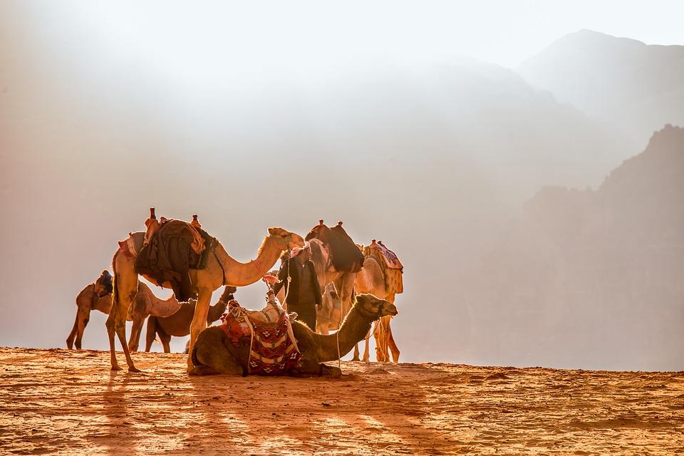 Camel-Jordan-Dromedary-Solar-Wade-Rooms-Desert-1846282.jpg
