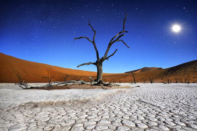 deadvlei-namibia-desert-tree.jpg