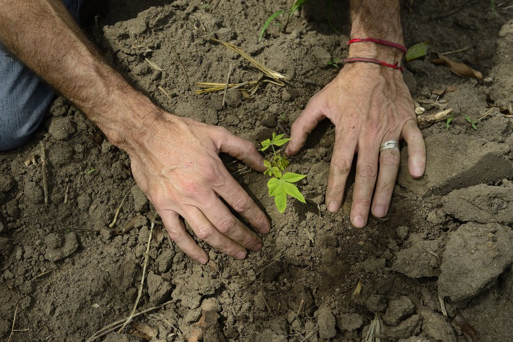 Farmer Hands for Website.jpg