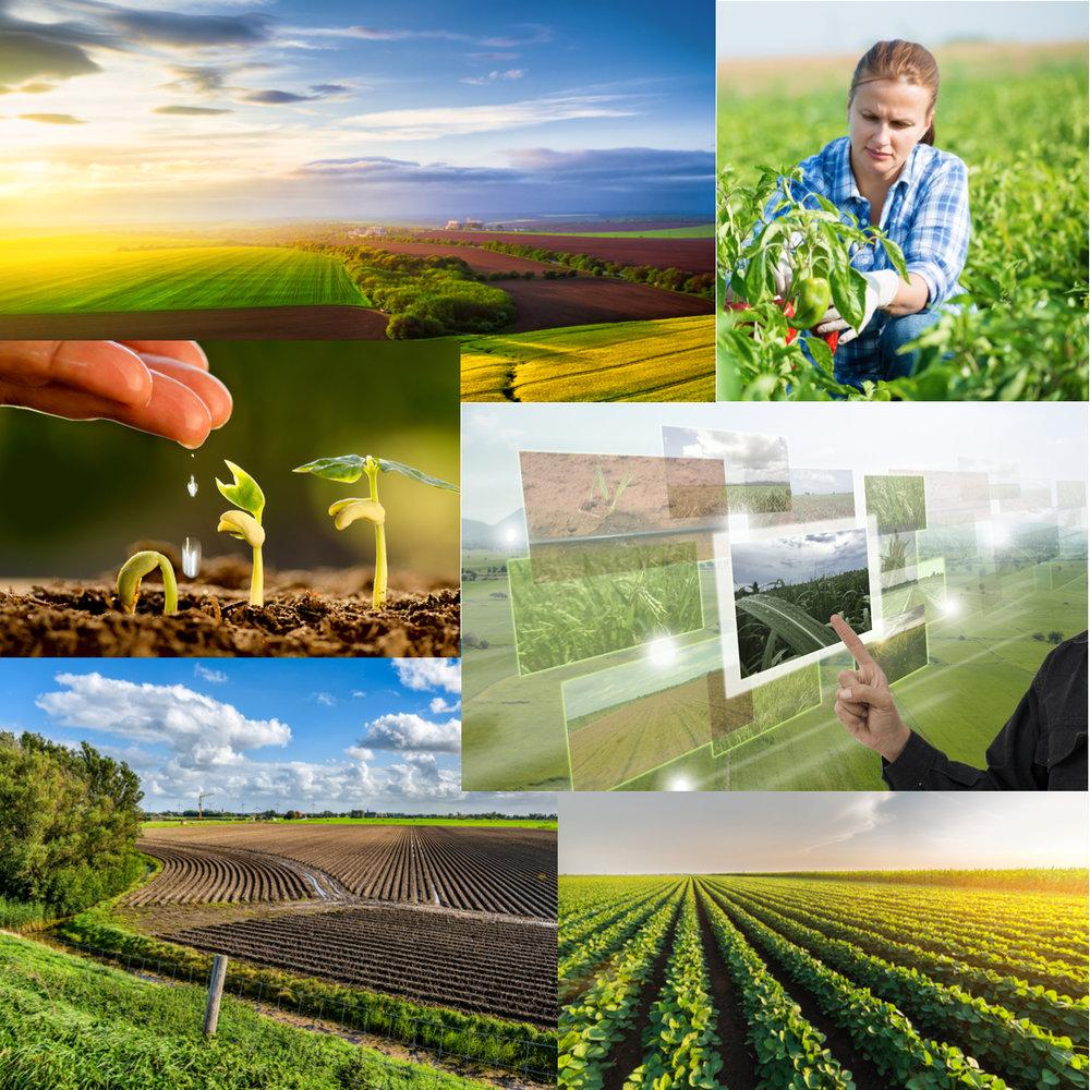 Precision Farming Collage.jpg