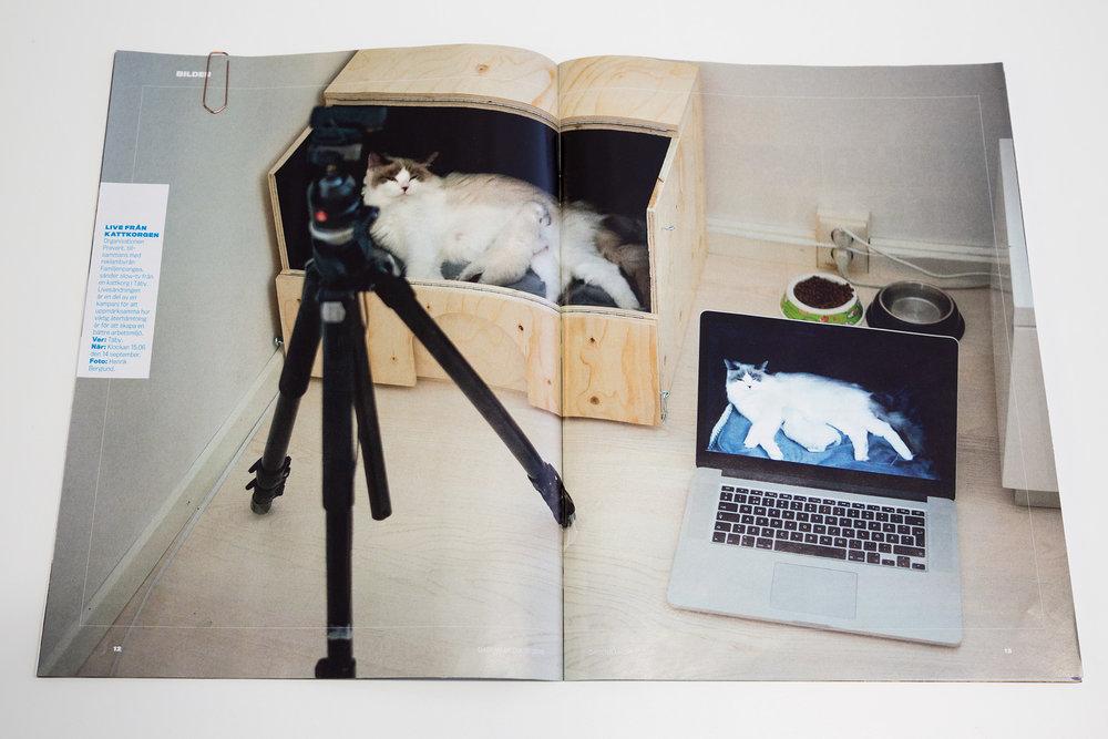 Slow-tv! Återhämtning med hjälp av avstressande kattunge.Kampanj för  Prevent . Bild från reportage i Dagens media.