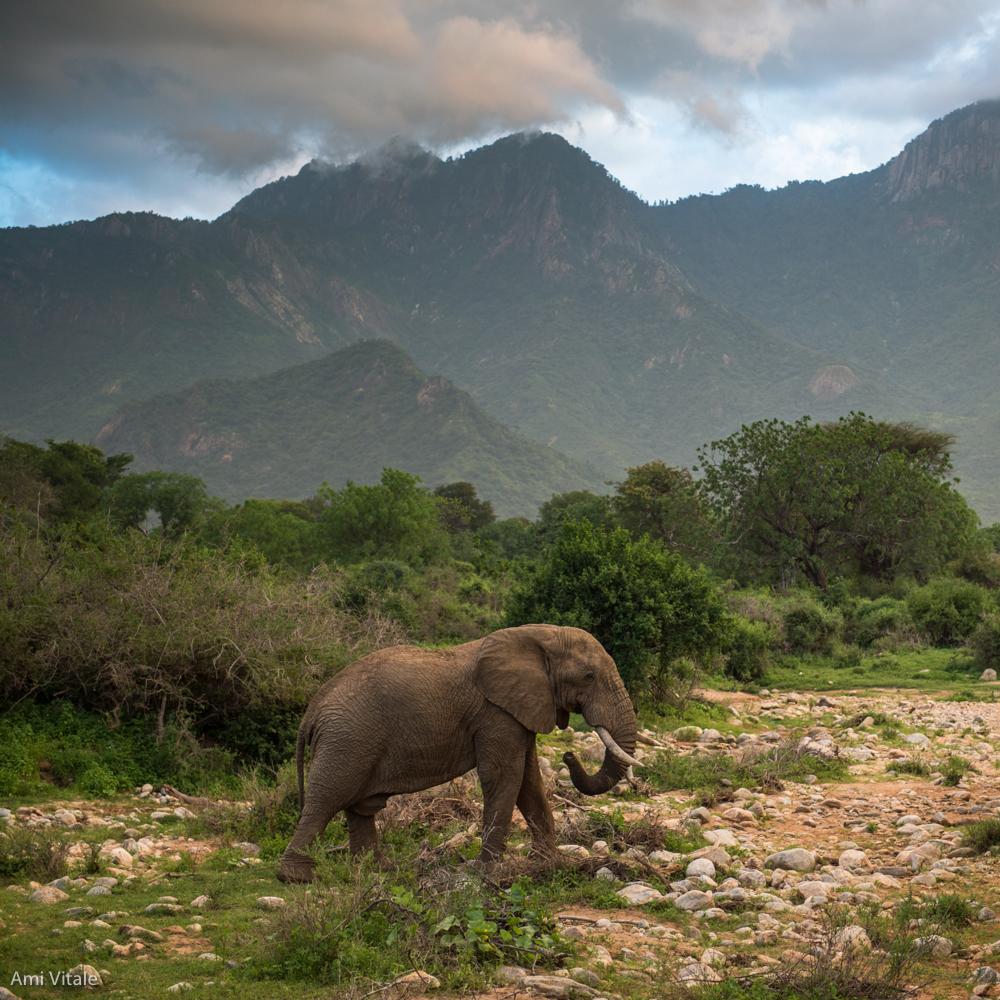 AV_Elephant32.jpg