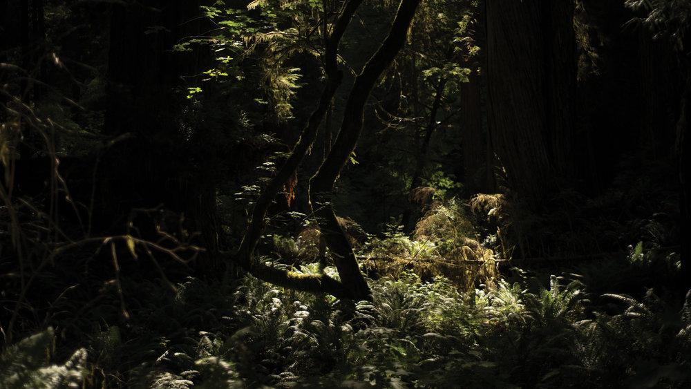Redwoods State Park, CA, 2016