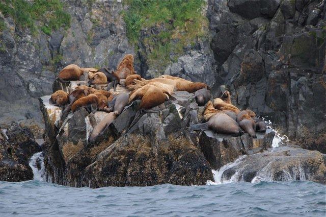 wildlifetour3.jpg