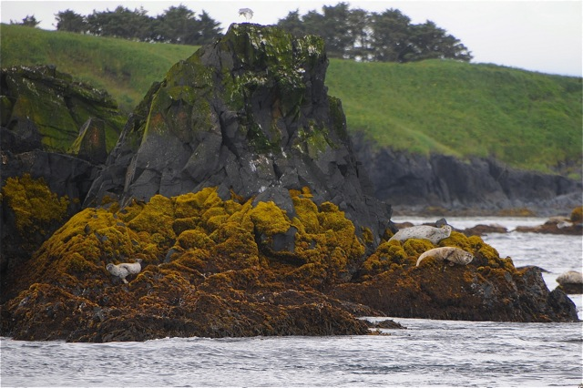 Kodiak Island Charters _ Wildlife