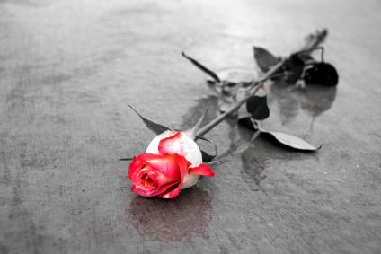 black and White red rose.jpg