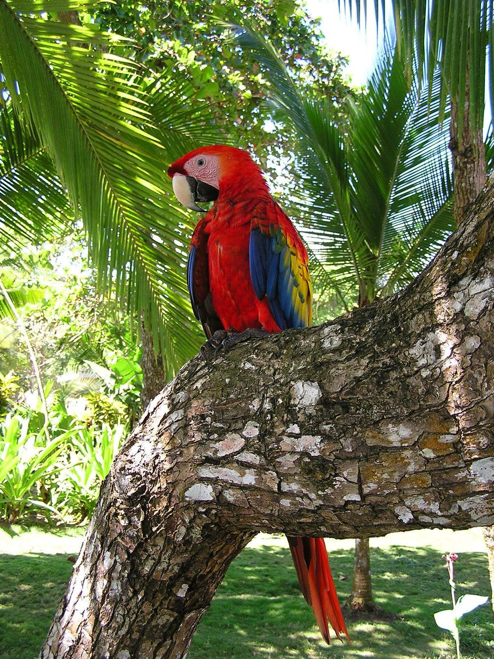 scarlet-macaw-1364890-1279x1705.jpg