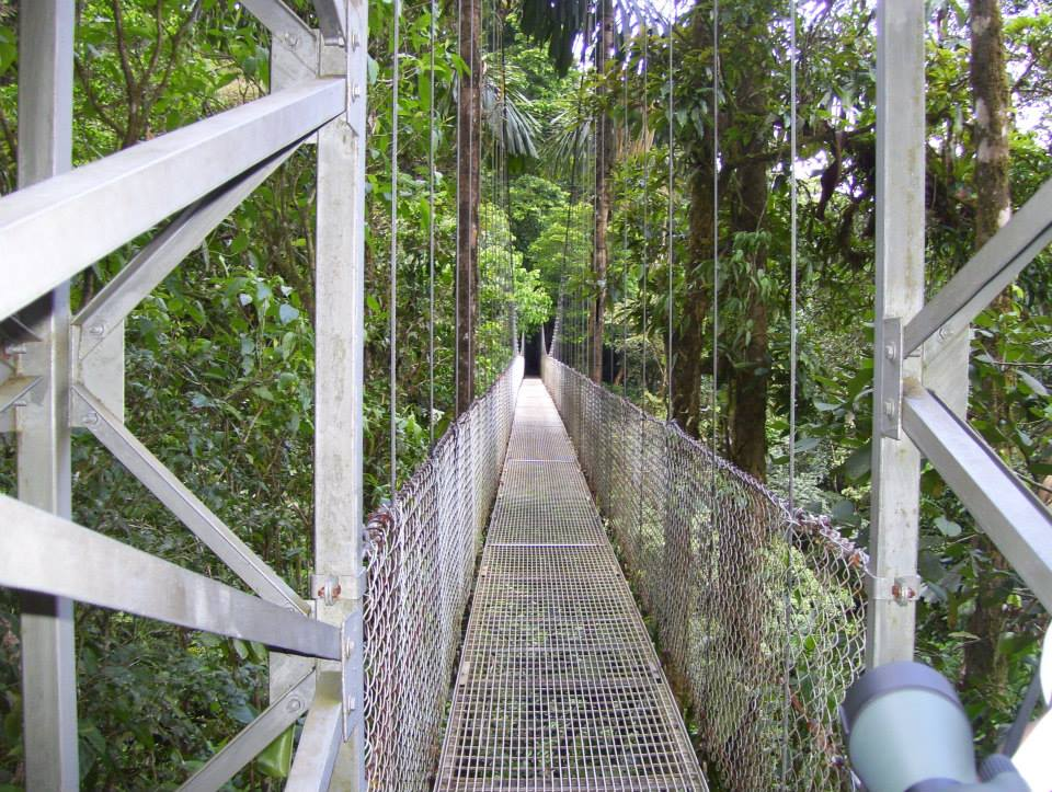 Hanging bridge.jpg