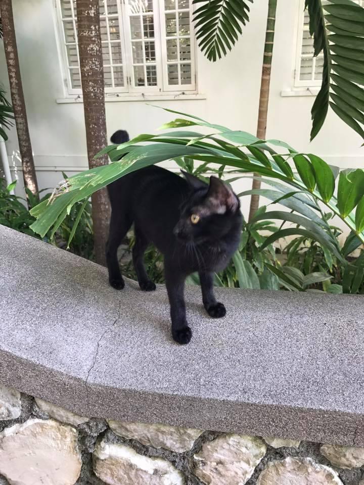 black cat.jpg