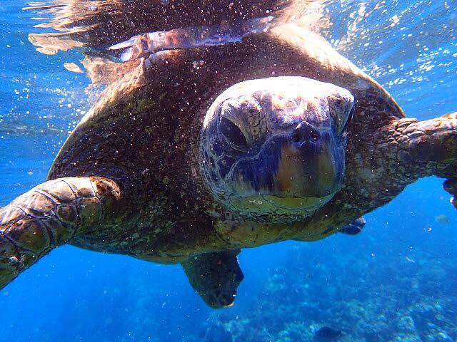 sea turtle 2.jpg