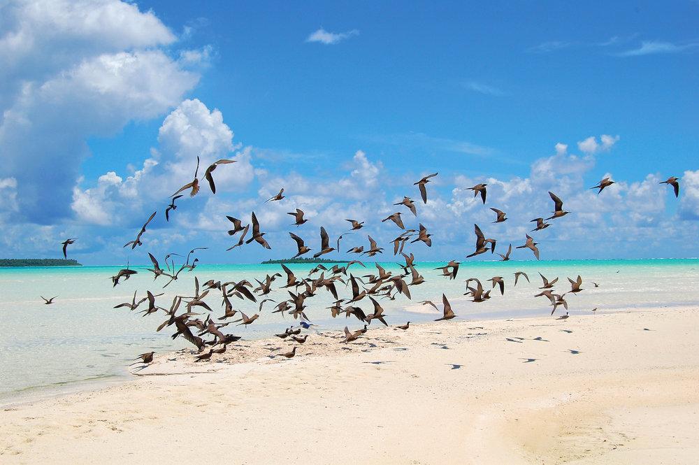 Birds_tmana-fauna13.jpg