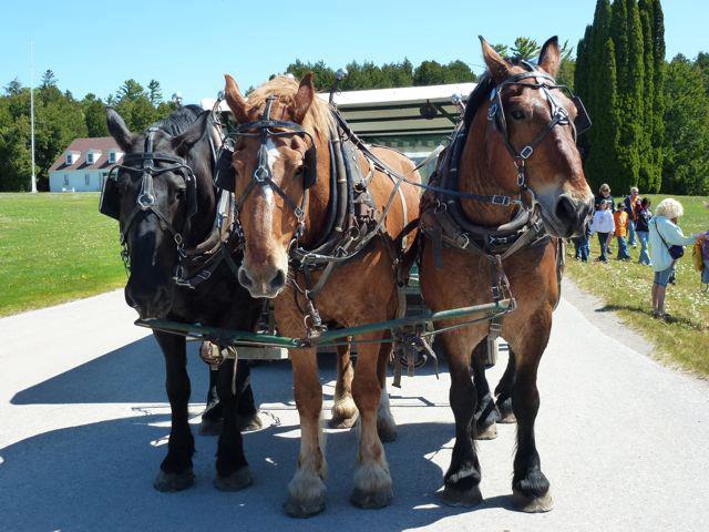 Horse team.jpg