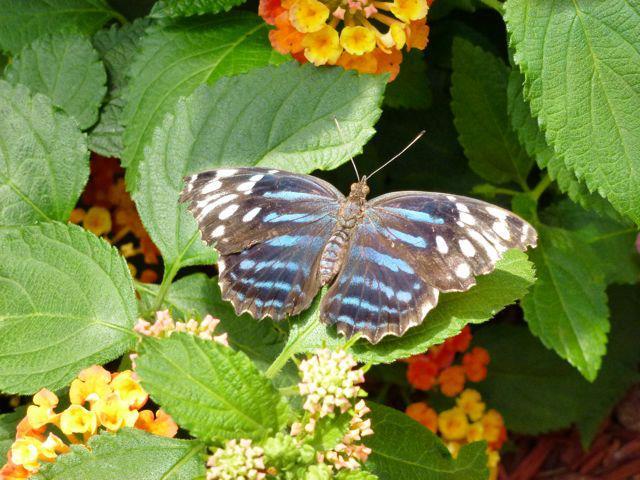 Butterfly 2 - Butterfly House.jpg