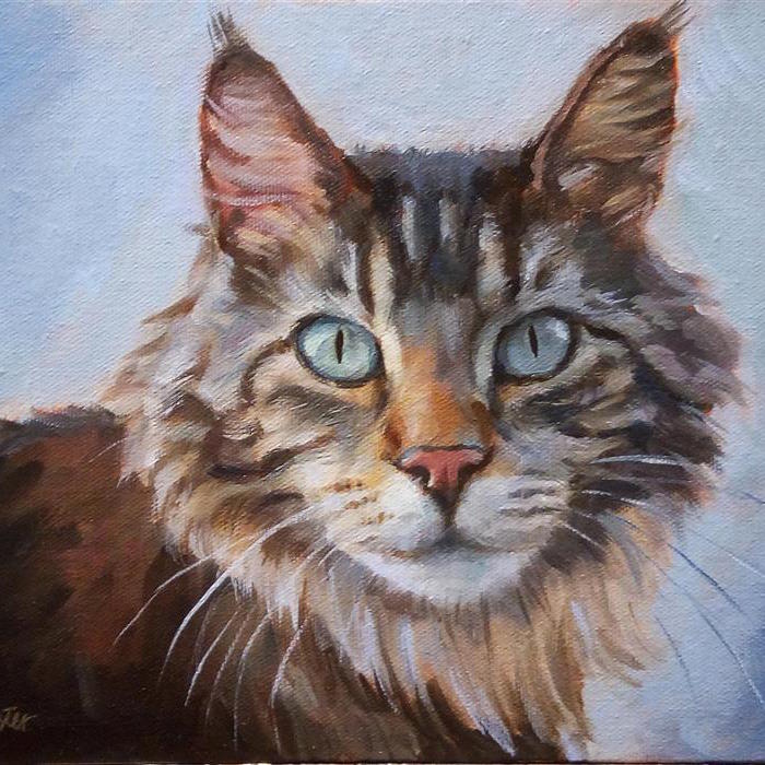 large_maine-coon-8x10-2018-full.jpg