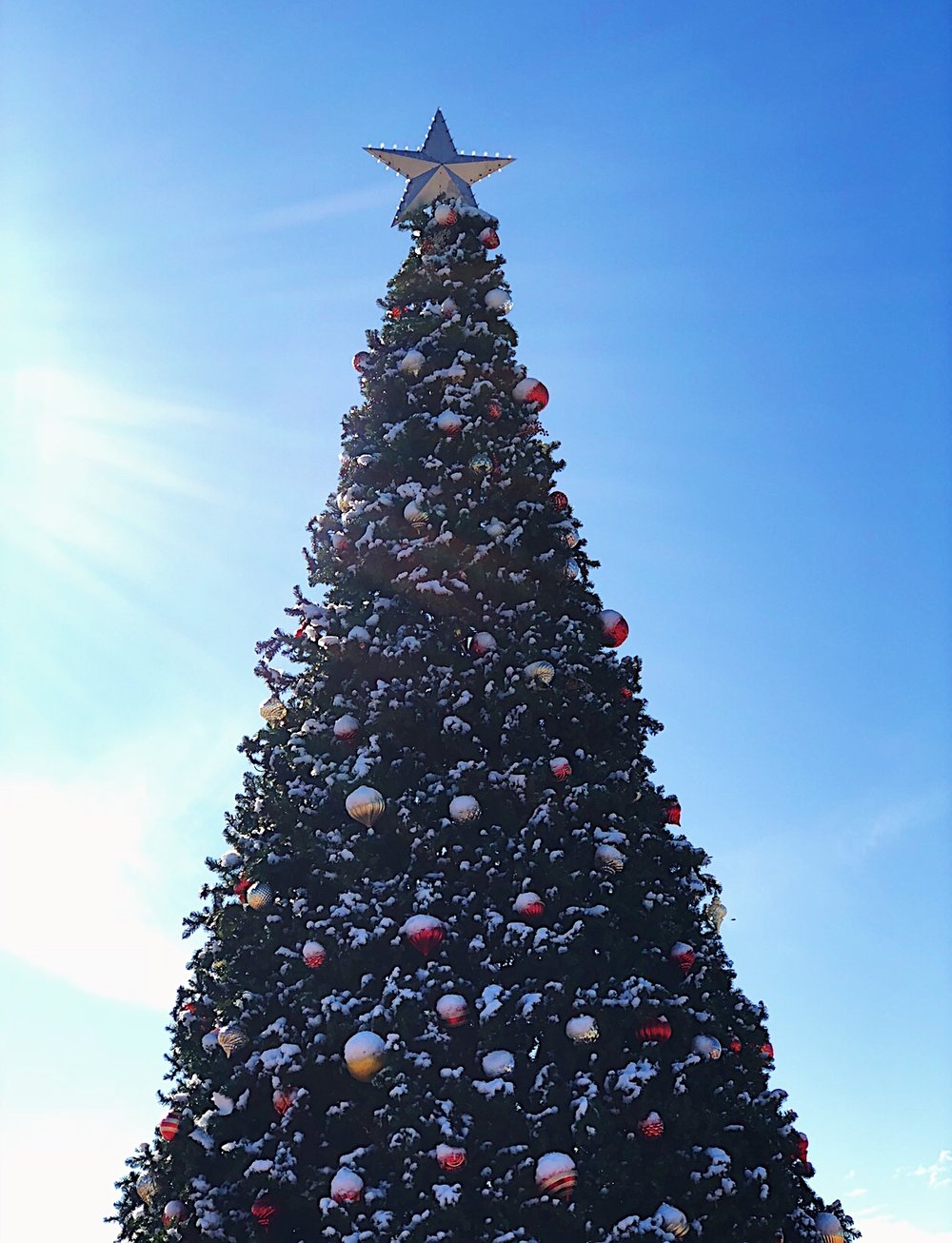 Randolph Christmas Tree.jpg