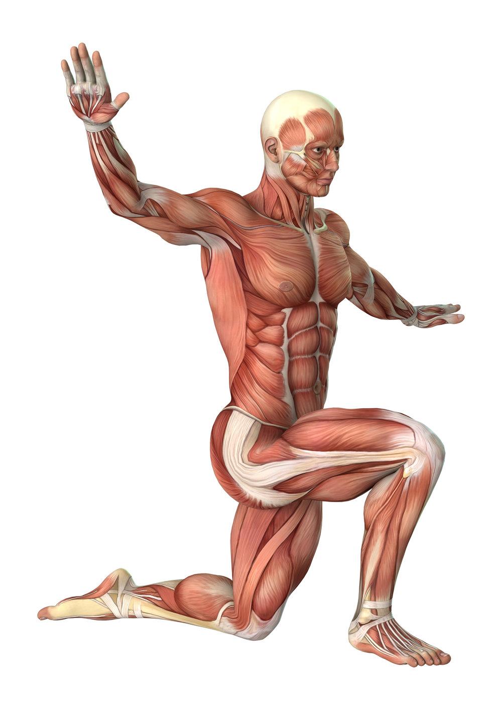 bigstock--D-Rendering-Male-Anatomy-Figu-159521438.jpg