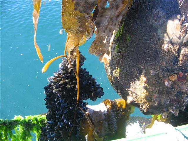 Water & seaweed.JPG