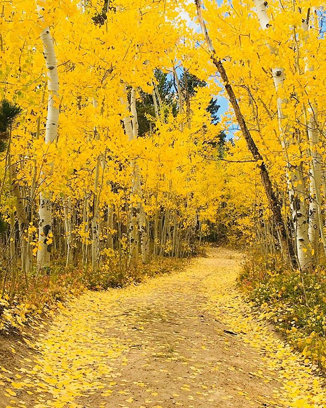 Autumn shows us how beautiful it is to let things go.  What we lose in flowers, we more than gain in fruits!  What are you letting go of this Fall? 🍂🍁 . . #kenoshapass #colorado #rockymountains #fall #leaves #autumn #letgo #newseason #changingleaves #aspens #pumpkinspice #crispair #renew #change #possibilities