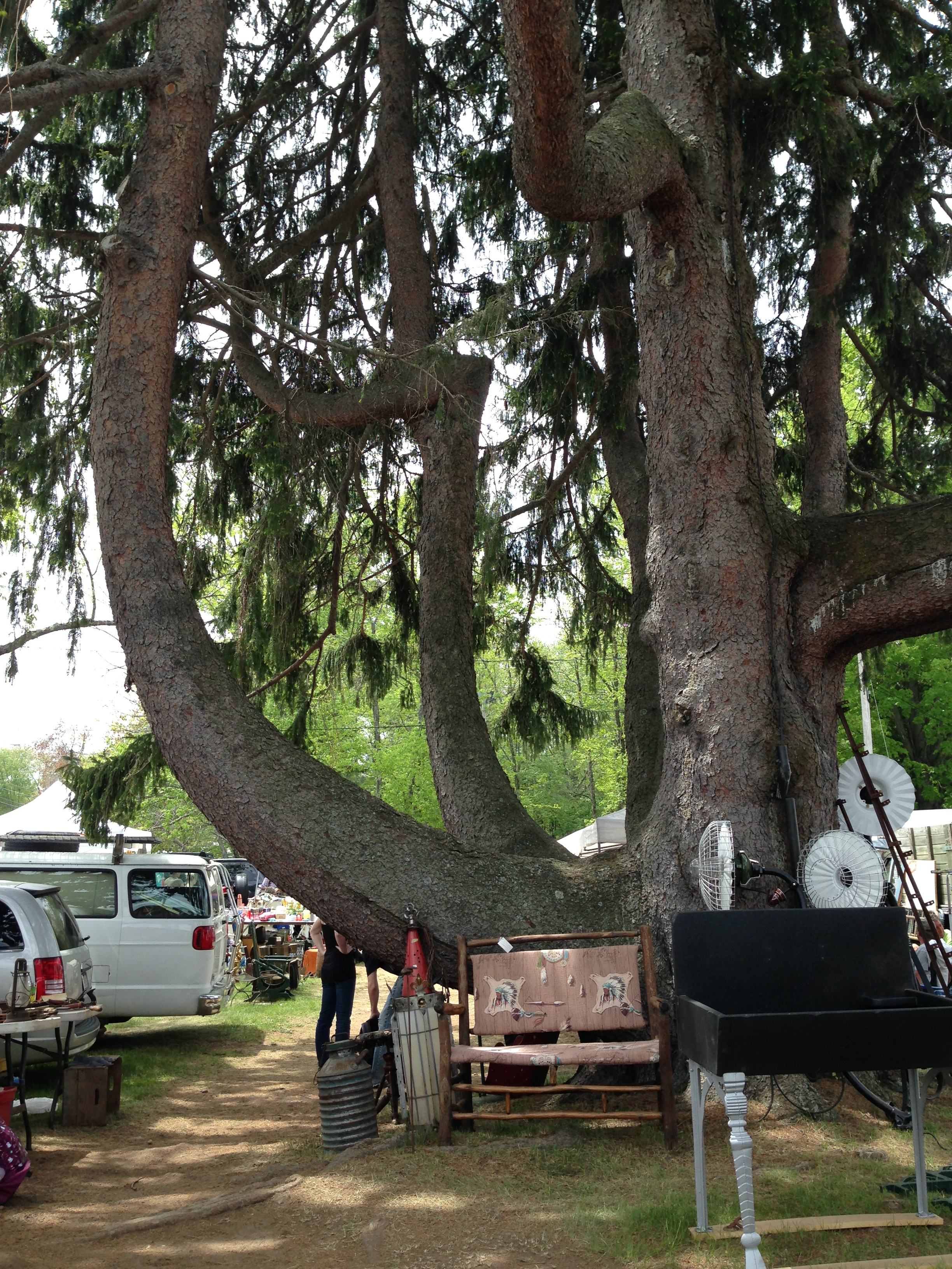 grand Brimfield tree